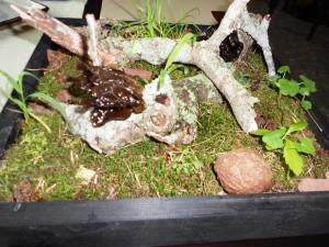 elements-woodear-mushroom